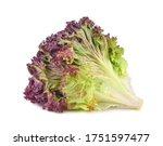 Fresh Lettuce Isolated On White ...