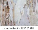 Eucalyptus Bark Tree