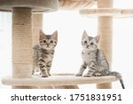 Two Kitten Sitting On Cat Tower