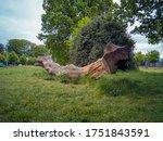 Big Piece Of Wood Lying On The...