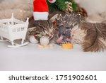 Sleeping Kitten And Sleeping...