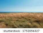 Yellow Meadow By The Sea In...