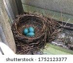 A Birds Nest With Blue Robin...