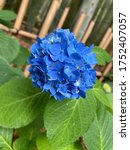 Small photo of Beautifully blooming flowers. Transient and beautiful flowers.