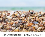 seashells on the seashore. sea... | Shutterstock . vector #1752447134