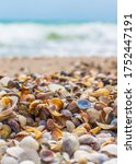 seashells on the seashore. sea... | Shutterstock . vector #1752447191