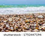 seashells on the seashore. sea... | Shutterstock . vector #1752447194