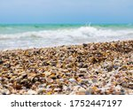 seashells on the seashore. sea... | Shutterstock . vector #1752447197