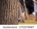 A Squirrel Climbs Down From The ...