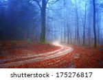 Autumn Mysterious Forest With...
