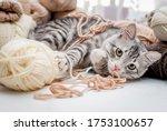 Fluffy Cute Gray Cat Lies Among ...