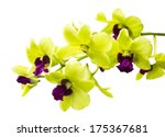 Green Orchid Isolated On White...