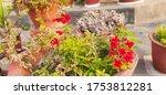 Beautiful Blooming Red Garden...