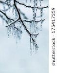 glazed tree branch after winter ... | Shutterstock . vector #175417259