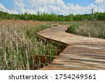 Footbridge Through Wetland  ...
