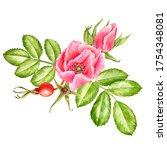 watercolor drawing wild rose...   Shutterstock . vector #1754348081