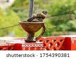 red-vented bulbul..  Bird photography  shot on Sony Alpha 6000