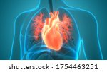 human  circulatory system heart ... | Shutterstock . vector #1754463251