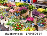 Flowers on display at a street market in Zwolle the Netherlands - stock photo