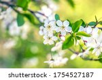 blooming tree branch in the... | Shutterstock . vector #1754527187