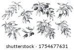 engraved olive branch. sketch...   Shutterstock .eps vector #1754677631