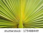 texture of green palm leaf... | Shutterstock . vector #175488449