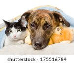 Stock photo sad dog and cat lying on a pillow under a blanket isolated on white background 175516784