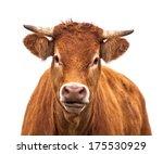 Happy Cow Portrait. A Farm...
