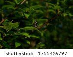 Butterfly On A Tree Branch....