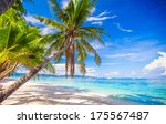 Coconut Palm Tree On The White...