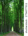 Tunnel Of Trees In The Forest