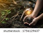 Light Bulbs That Grow  In The...