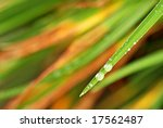 Single leaf of a daylily with raindrops in autumn.  Selective focus with extremely shallow dof. - stock photo