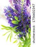 vibrant summer wild lupines... | Shutterstock . vector #1756602347