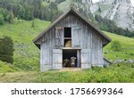 Two Brown Swiss Cows Inside A...