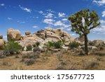 the joshua tree and stone...   Shutterstock . vector #175677725