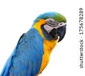 a beautiful bird blue and gold... | Shutterstock . vector #175678289