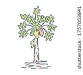 Doodle Papaya Tree Illustration ...