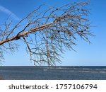 Dried Trees On The Beach Of Th...