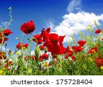 Summer Wildflowers And Blue Sky