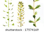 three different plants against... | Shutterstock . vector #17574169
