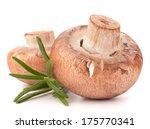 brown champignon mushroom and... | Shutterstock . vector #175770341