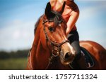 Horse In Head Portraits With...