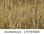 Dry Tall Reed By The River.