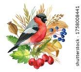 Bullfinch And Flowers Bird  Dry ...