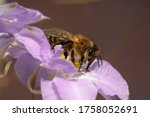 Honey Bee On A Delphinium...