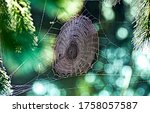 Spider Web In Nature Morning....