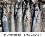 Close up of the Pacific saury,  (Cololabis saira) is a member of the family Scomberesocidae. also known by the name mackerel pike.