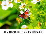 Butterfly On Blossom Flower On...