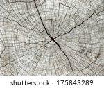 Abstract Texture Of Tree Stump...